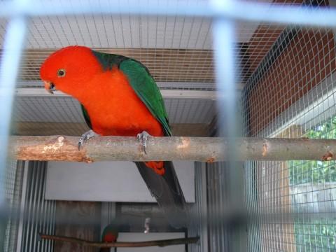 Vogelmarktplaats belgie